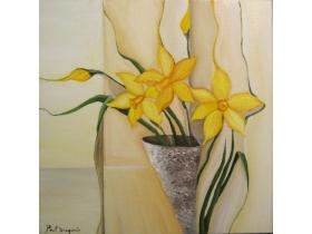 Narcise galbene